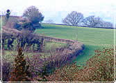 a hedge snakes off into the distance across a field